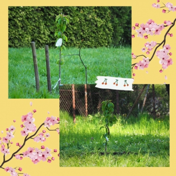 XIV LO - Zielona Czternastka pora na sadzenie1